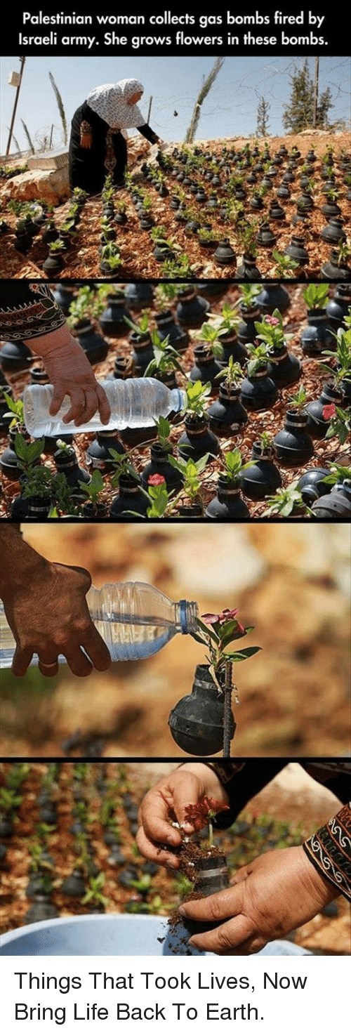 Life, Army, and Earth: Palestinian woman collects gas bombs fired by  Israeli army. She grows flowers in these bombs. <p>Things That Took Lives, Now Bring Life Back To Earth.</p>