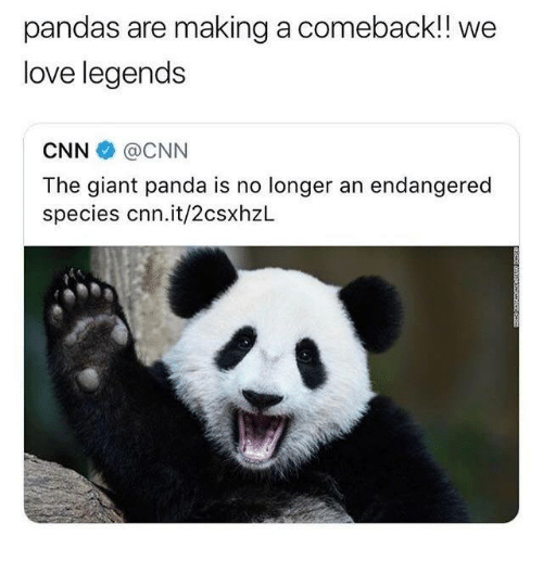 giant panda: pandas are making a comeback!! we  love legends  CNN @CNN  The giant panda is no longer an endangered  species cnn.it/2csxhzL