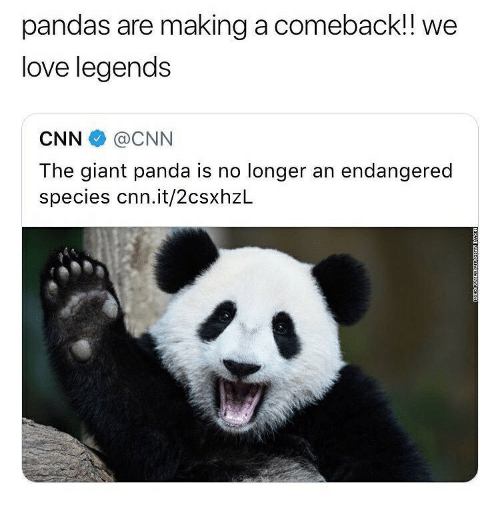 giant panda: pandas are making a comeback!! we  love legends  CNN@CNN  The giant panda is no longer an endangered  species cnn.it/2csxhzL