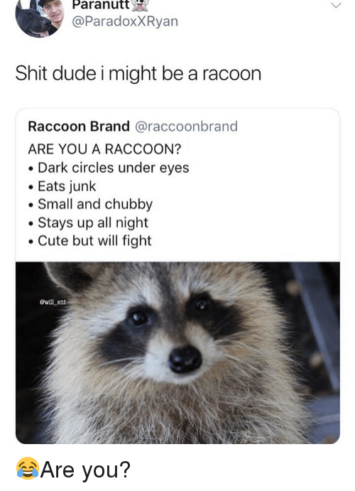 Cute, Dude, and Memes: Paranutt  @ParadoxXRyan  Shit dude i might be a racoon  Raccoon Brand @raccoonbrand  ARE YOU A RACCOON?  Dark circles under eyes  Eats junlk  Small and chubby  Stays up all night  Cute but will fight  øwll ent 😂Are you?