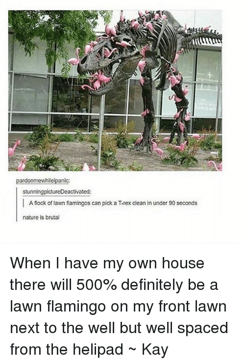 naturalism: pardonmewhileipanic:  stunningpictureDeactivated:  I A flock of lawn flamingos can pick a T-rex clean in under 90 seconds  nature is brutal When I have my own house there will 500% definitely be a lawn flamingo on my front lawn next to the well but well spaced from the helipad ~ Kay