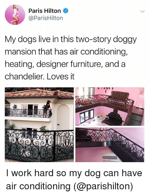 parishilton: Paris Hilton  @ParisHilton  My dogs live in this two-story doggy  mansion that has air conditioning,  heating, designer furniture, and a  chandelier. Loves it I work hard so my dog can have air conditioning (@parishilton)