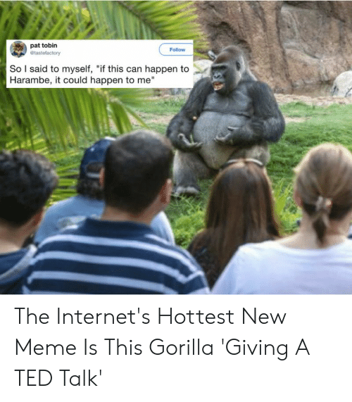 """Gorilla Meme: pat tobin  Follow  So l said to myself, """"if this can happen to  Harambe, it could happen to me"""" The Internet's Hottest New Meme Is This Gorilla 'Giving A TED Talk'"""