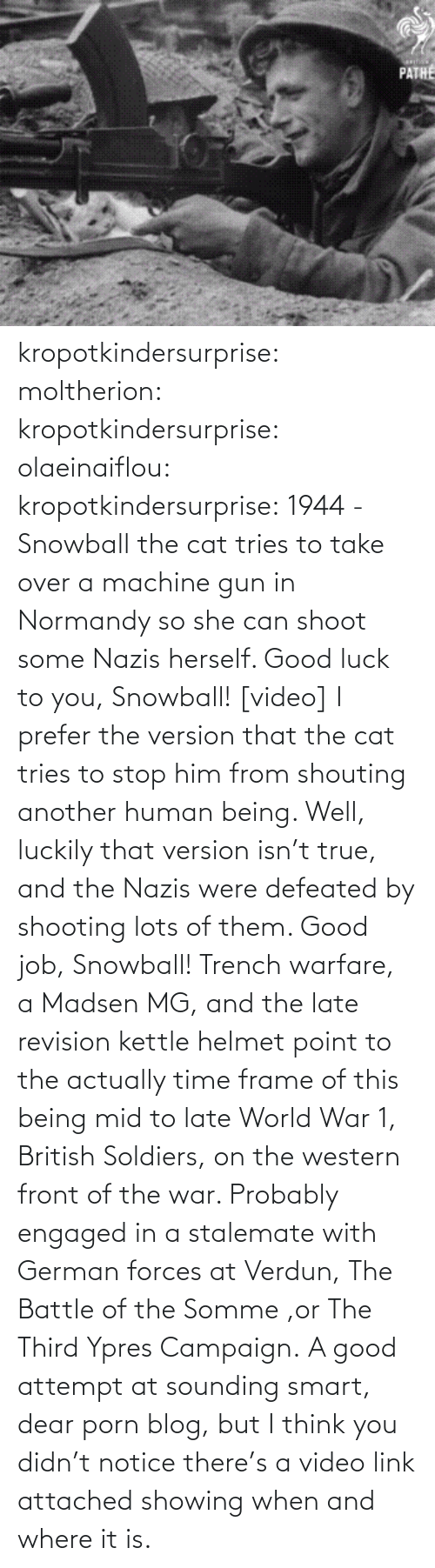 world war 1: PATHE kropotkindersurprise: moltherion:  kropotkindersurprise:  olaeinaiflou:  kropotkindersurprise: 1944 - Snowball the cat tries to take over a machine gun in Normandy so she can shoot some Nazis herself. Good luck to you, Snowball! [video]  I prefer the version that the cat tries to stop him from shouting another human being.   Well, luckily that version isn't true, and the Nazis were defeated by shooting lots of them. Good job, Snowball!   Trench warfare, a Madsen MG, and the late revision kettle helmet point to the actually time frame of this being mid to late World War 1, British Soldiers, on the western front of the war. Probably engaged in a stalemate with German forces at Verdun, The Battle of the Somme ,or The Third Ypres Campaign.  A good attempt at sounding smart, dear porn blog, but I think you didn't notice there's a video link attached showing when and where it is.