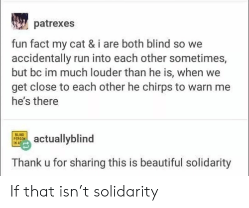 Thank U: patrexes  fun fact my cat & i are both blind so we  accidentally run into each other sometimes,  but bc im much louder than he is, when we  get close to each other he chirps to warn me  he's there  BUIND  PERSON  IN A  actuallyblind  Thank u for sharing this is beautiful solidarity If that isn't solidarity