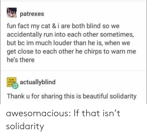 Thank U: patrexes  fun fact my cat & i are both blind so we  accidentally run into each other sometimes,  but bc im much louder than he is, when we  get close to each other he chirps to warn me  he's there  BUIND  PERSON  IN A  actuallyblind  Thank u for sharing this is beautiful solidarity awesomacious:  If that isn't solidarity