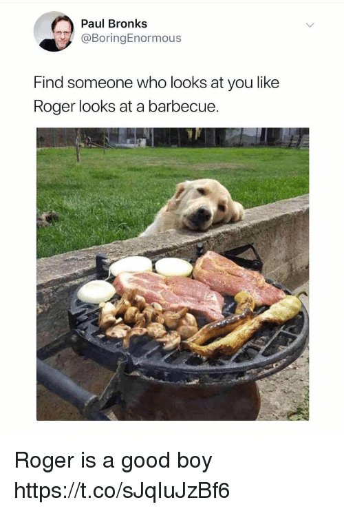 Funny, Roger, and Good: Paul Bronks  @BoringEnormous  Find someone who looks at you like  Roger looks at a barbecue Roger is a good boy https://t.co/sJqIuJzBf6