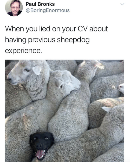 sheepdog: Paul Bronks  @BoringEnormous  When you lied on your CV about  having previous sheepdog  experience