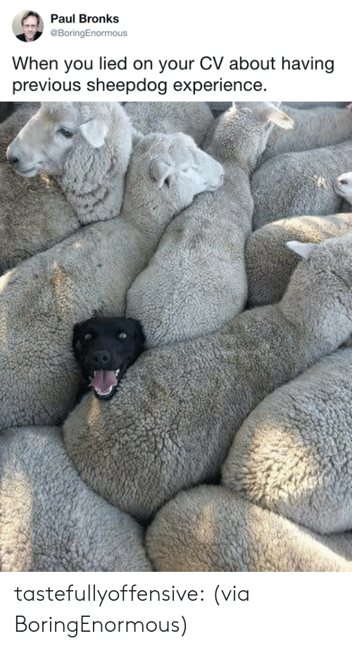 sheepdog: Paul Bronks  @BoringEnormous  When you lied on your CV about having  previous sheepdog experience. tastefullyoffensive: (via BoringEnormous)