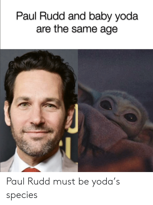 Yoda, Baby, and Paul Rudd: Paul Rudd and baby yoda  are the same age Paul Rudd must be yoda's species