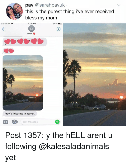 Dogs, Heaven, and Memes: pav @sarahpavuk  this is the purest thing i've ever received  bless my mom  Sprint  1:24 PIM  mom  ot  Proof all dogs go to heaven.  Text Message Post 1357: y the hELL arent u following @kalesaladanimals yet