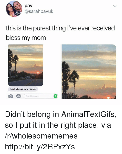 Dogs, Heaven, and All Dogs Go to Heaven: pav  @sarahpavuk  this is the purest thing i've ever received  bless my mom  Proof all dogs go to heaven.  Text Message Didn't belong in AnimalTextGifs, so I put it in the right place. via /r/wholesomememes http://bit.ly/2RPxzYs