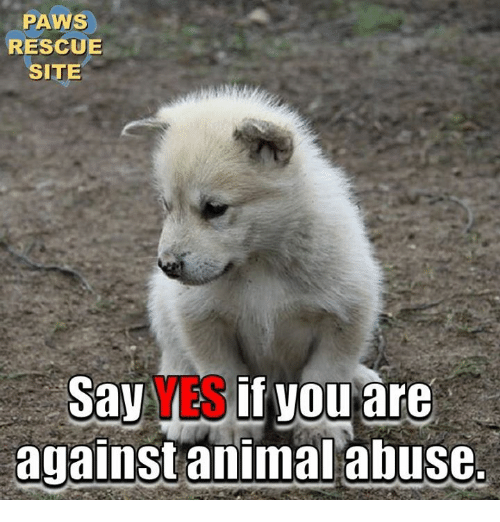 Animal Abuse: PAWS  RESCUE  SITE  SayAES if vou are  against animal abuse