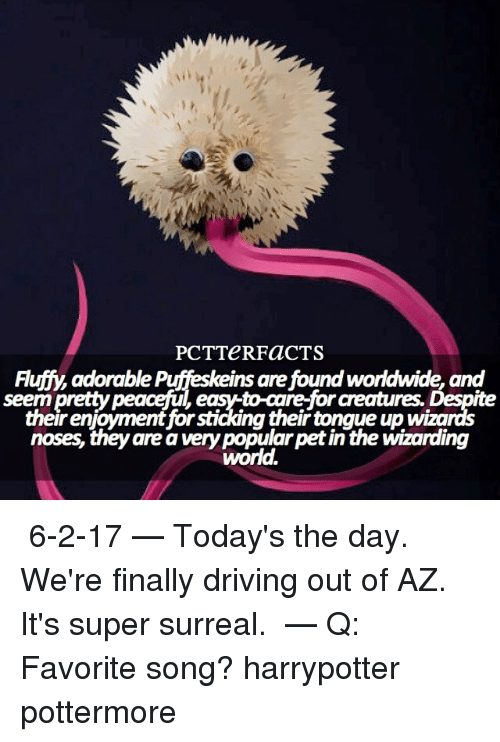 surrealism: PCT TeRFaCTS  Fluffy adorable Ins are found worldwide, and  seem  pretty peaceful  to-are for creatures. Despite  eastto their noses, they are avery popular petin the wizarding  world. ↠ 6-2-17 — Today's the day. We're finally driving out of AZ. It's super surreal. ⠀⠀⠀⠀⠀⠀⠀⠀⠀⠀⠀⠀ — Q: Favorite song? harrypotter pottermore