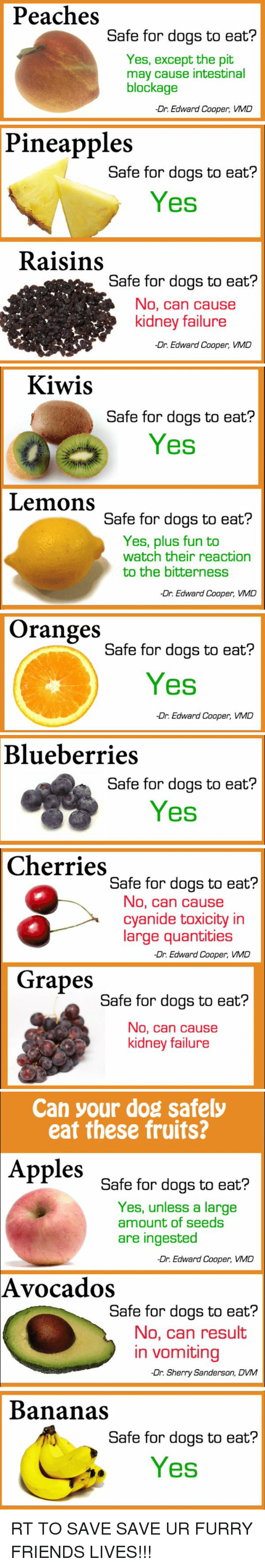 dvm: Peaches  Safe for dogs to eat?  Yes, except the pit  may cause intestinal  blockage  -Dr. Edward Cooper, VMD  Pineapples  Safe for dogs to eat?  Yes  Raisins  Safe for dogs to eat?  No, can cause  kidney failure  -Dr. Edward Cooper, VMD   Kiwis  Safe for dogs to eat?  Yes  Lemons  Safe for dogs to eat?  Yes, plus fun to  watch their reaction  to the bitterness  -Dr. Edward Cooper, VMD  Oranges  Safe for dogs to eat?  Yes  Dr. Edward Cooper, VMD   Blueberries  Safe for dogs to eat?  Yes  Cherries  Safe for dogs to eat?  No, can cause  cyanide toxicity in  large quantities  -Dr. Edward Cooper, VMD  Grapes  Safe for dogs to eat?  No, can cause  kidney failure   Can your dog safely  eat these fruits?  Apples  Safe for dogs to eat?  Yes, unless a large  amount of seeds  are ingested  -Dr. Edward Cooper, VMD  Avocados  Safe for dogs to eat?  No, can result  in vomiting  -Dr. Sherry Sanderson, DVM  Bananas  Safe for dogs to eat?  Yes RT TO SAVE SAVE UR FURRY FRIENDS LIVES!!!