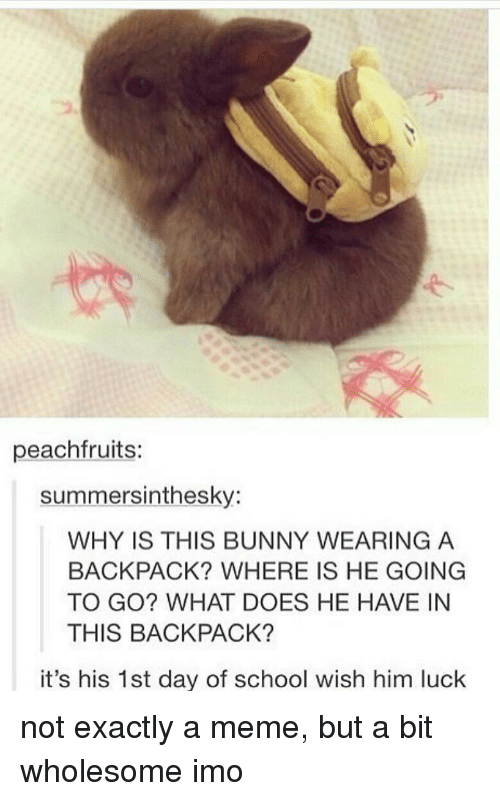 Meme, School, and What Does: peachfruits:  summersinthesky:  WHY IS THIS BUNNY WEARING A  BACKPACK? WHERE IS HE GOING  TO GO? WHAT DOES HE HAVE IN  THIS BACKPACK?  it's his 1st day of school wish him luck <p>not exactly a meme, but a bit wholesome imo</p>