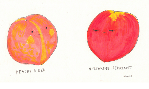 Keen, Nectarine, and Reluctant: PEACHy KEEN  NECTARINE RELUCTANT  rubyet
