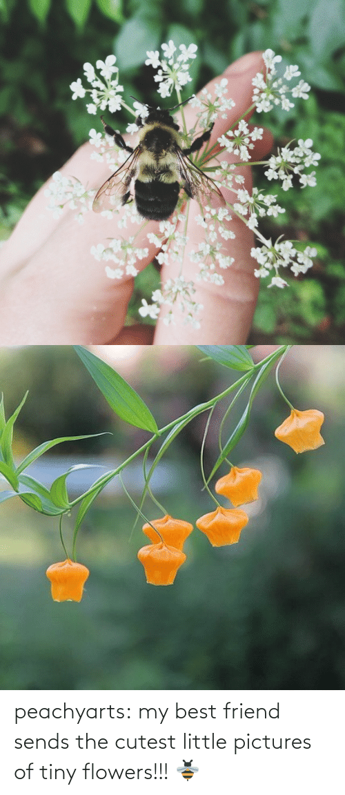 pictures of: peachyarts:  my best friend sends the cutest little pictures of tiny flowers!!! 🐝