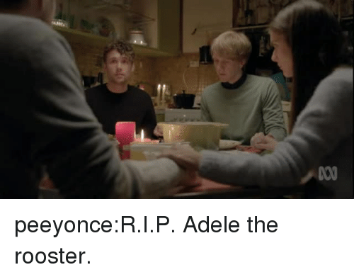 Adele: peeyonce:R.I.P. Adele the rooster.