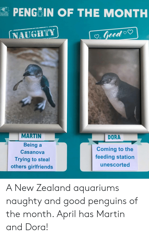 Dora: PENG IN OF THE MONTH  NATIONA  AQUARIUM  NAUGHTY  MARTIN  Being a  Casanova  Trying to steal  others girlfriends  DORA  Coming to the  feeding station  unescorted A New Zealand aquariums naughty and good penguins of the month. April has Martin and Dora!