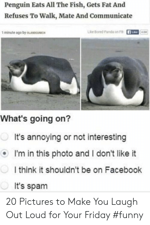 laugh out loud: Penguin Eats All The Fish, Gets Fat And  Refuses To Walk, Mate And Communicate  1 minute ago by OLANDOICH  Lhe Bored parda on FB  What's going on?  It's annoying or not interesting  I'm in this photo and I don't like it  I think it shouldn't be on Facebook  It's spam 20 Pictures to Make You Laugh Out Loud for Your Friday #funny