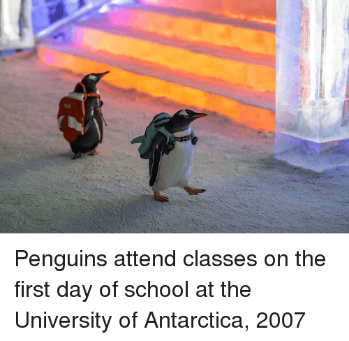 first day of school: Penguins attend classes on the first day of school at the University of Antarctica, 2007