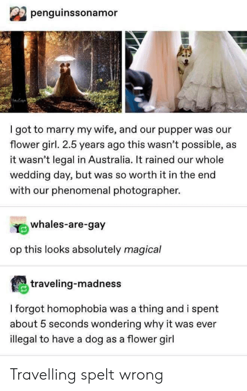 Phenomenal, Australia, and Flower: penguinssonamor  I got to marry my wife, and our pupper was our  flower girl. 2.5 years ago this wasn't possible,  it wasn't legal in Australia. It rained our whole  wedding day, but was so worth it in the end  with our phenomenal photographer.  whales-are-gay  op this looks absolutely magical  traveling-madness  I forgot homophobia was a thing and i spent  about 5 seconds wondering why it was ever  illegal to have a dog as a flower girl Travelling spelt wrong