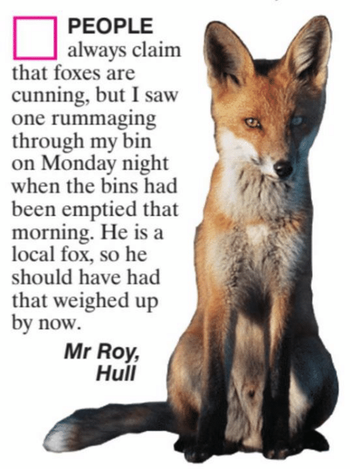 Memes, Saw, and Monday: PEOPLE  always claim  that foxes are  cunning, but I saw  one rummaging  through my bin  on Monday night  when the bins had  been emptied that  morning. He is a  local fox, so he  should have had  that weighed up  by now  Mr Roy,  Hull