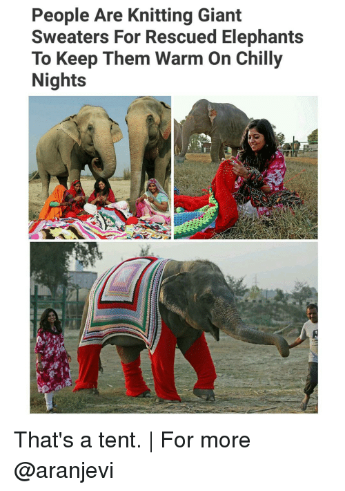 Chillys: People Are Knitting Giant  Sweaters For Rescued Elephants  To Keep Them Warm on Chilly  Nights That's a tent. | For more @aranjevi