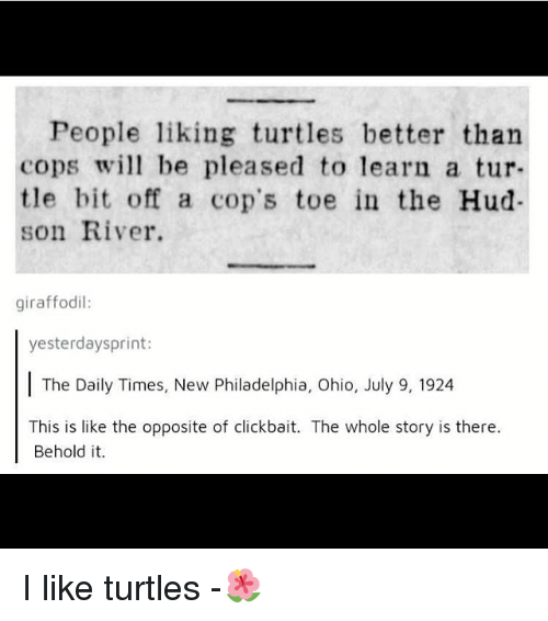 hud: People liking turtles better than  cops wi be pleased to learn a tur  tle bit off a cop's toe in the Hud-  son River.  giraffodil:  yesterdaysprint:  The Daily Times, New Philadelphia, Ohio, July 9, 1924  This is like the opposite of clickbait. The whole story is there.  Behold it. I like turtles -🌺