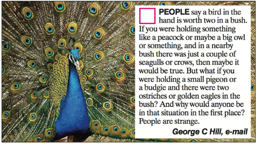 Georg: PEOPLE say a bird in the  hand is worth two in a bush.  If you were holding somethin  like a peacock or maybe a big owl  or something, and in a nearby  bush there was just a couple of  seagulls or crows, then maybe it  would be true. But what if you  were holding a small pigeon or  a budgie and there were two  ostriches or golden eagles in the  SOS bush? And why would anyone be  in that situation in the first place?  People are strange.  George C Hill, e-mail
