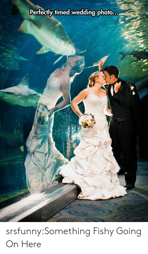 Tumblr, Blog, and Http: Perfectly timed wedding photo... srsfunny:Something Fishy Going On Here