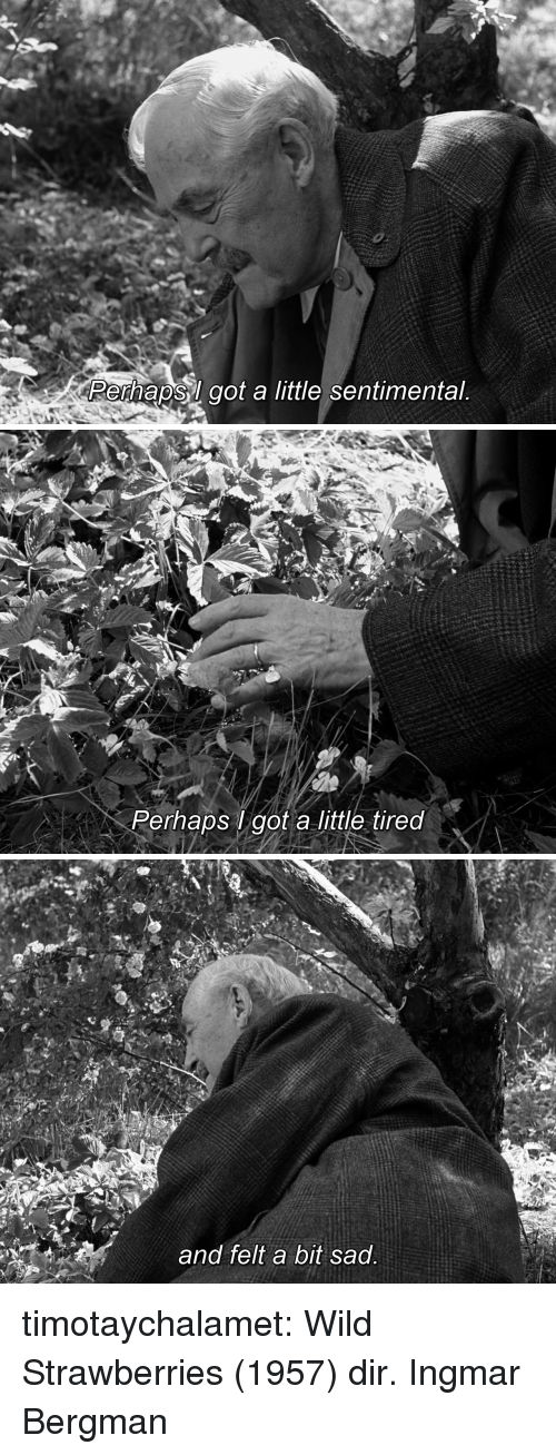 Tumblr, Blog, and Http: Perhapsl got a little sentimental   Perhaps got a little tired   and felt a bit sad timotaychalamet: Wild Strawberries (1957) dir. Ingmar Bergman