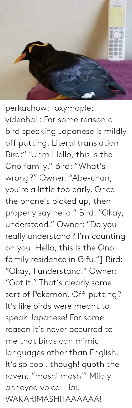 """Family, Hello, and Phone: perkachow:  foxymaple:  videohall:  For some reason a bird speaking Japanese is mildly off putting.     Literal translation Bird:"""" 'Uhm Hello, this is the Ono family."""" Bird: """"What's wrong?"""" Owner: """"Abe-chan, you're a little too early. Once the phone's picked up, then properly say hello."""" Bird: """"Okay, understood."""" Owner: """"Do you really understand? I'm counting on you. Hello, this is the Ono family residence in Gifu.""""] Bird: """"Okay, I understand!"""" Owner: """"Got it.""""  That's clearly some sort of Pokemon.  Off-putting? It's like birds were meant to speak Japanese!  For some reason it's never occurred to me that birds can mimic languages other than English. It's so cool, though!     quoth the raven;""""moshi moshi""""  Mildly annoyed voice: Hai, WAKARIMASHITAAAAAA!"""