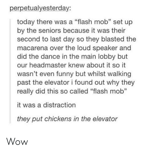 """seniors: perpetualyesterday:  today there was a """"flash mob"""" set up  by the seniors because it was their  second to last day so they blasted the  macarena over the loud speaker and  did the dance in the main lobby but  our headmaster knew about it so it  wasn't even funny but whilst walking  past the elevator i found out why they  really did this so called """"flash mob""""  it was a distraction  they put chickens in the elevator Wow"""