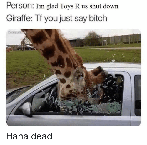 Bitch, Dank, and Toys R Us: Person: I'm glad Toys R us shut down  Giraffe: Tf you just say bitch Haha dead