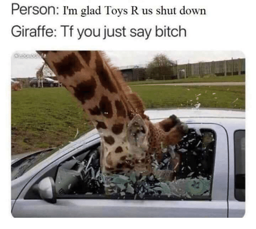 Bitch, Toys R Us, and Giraffe: Person: I'm glad Toys R us shut down  Giraffe: Tf you just say bitch
