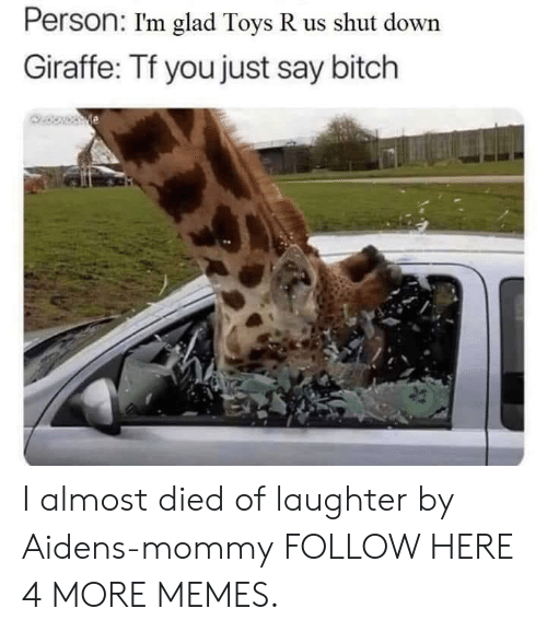 Bitch, Dank, and Memes: Person: I'm glad Toys R us shut down  Giraffe: Tf you just say bitch I almost died of laughter by Aidens-mommy FOLLOW HERE 4 MORE MEMES.