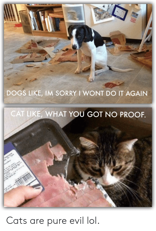 I Wont Do It Again: PEST  DOGS LIKE, 1M SORRY I WONT DO IT AGAIN  CAT LIKE, WHAT YOU GOT NO PROOF.  ** Cats are pure evil lol.