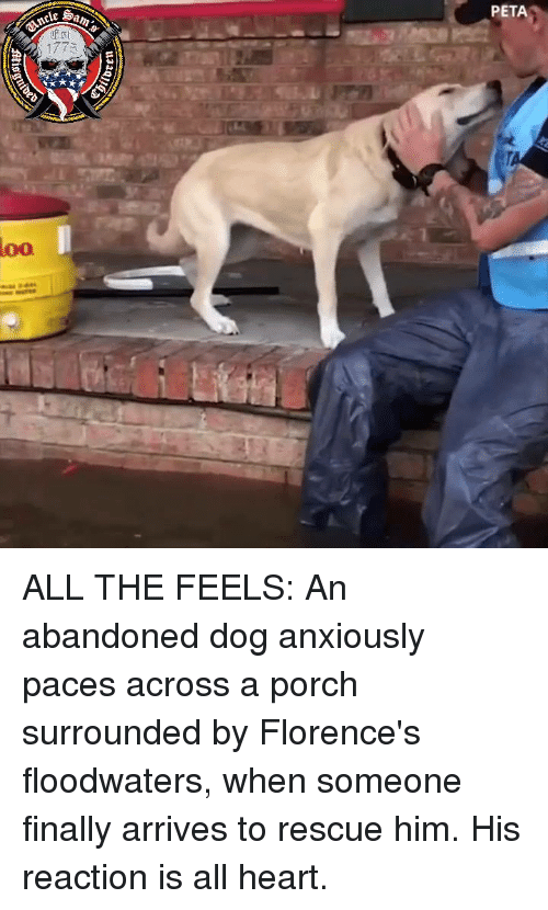 Peta, Heart, and All The: PETA  loo ALL THE FEELS: An abandoned dog anxiously paces across a porch surrounded by Florence's floodwaters, when someone finally arrives to rescue him. His reaction is all heart.