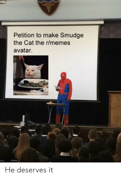 He Deserves: Petition to make Smudge  the Cat the r/memes  avatar. He deserves it