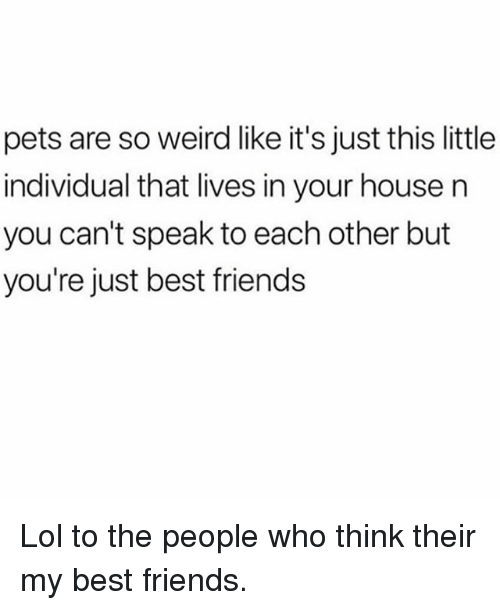 Friends, Lol, and Memes: pets are so weird like it's just this little  individual that lives in your house n  you can't speak to each other but  you're just best friends Lol to the people who think their my best friends.