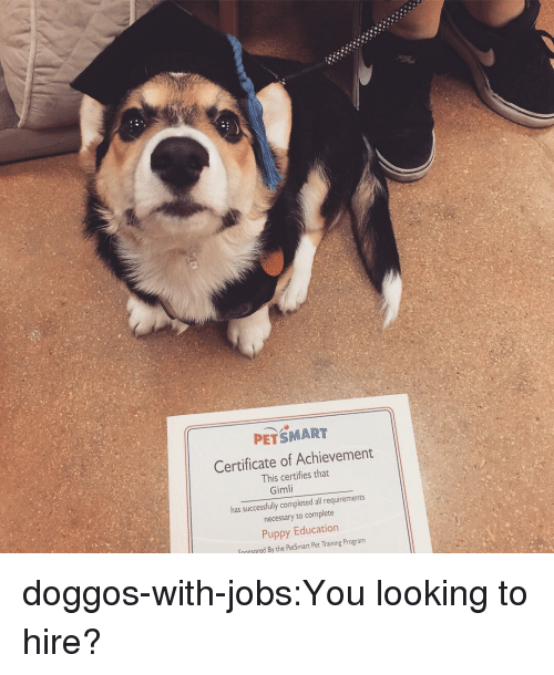 Petsmart: PETSMART  Certificate of Achievement  This certifies tha  Gimli  has successfully completed all requirements  necessary to complete  Puppy Education  Snonsered By the PetSmart Pet Training Program doggos-with-jobs:You looking to hire?