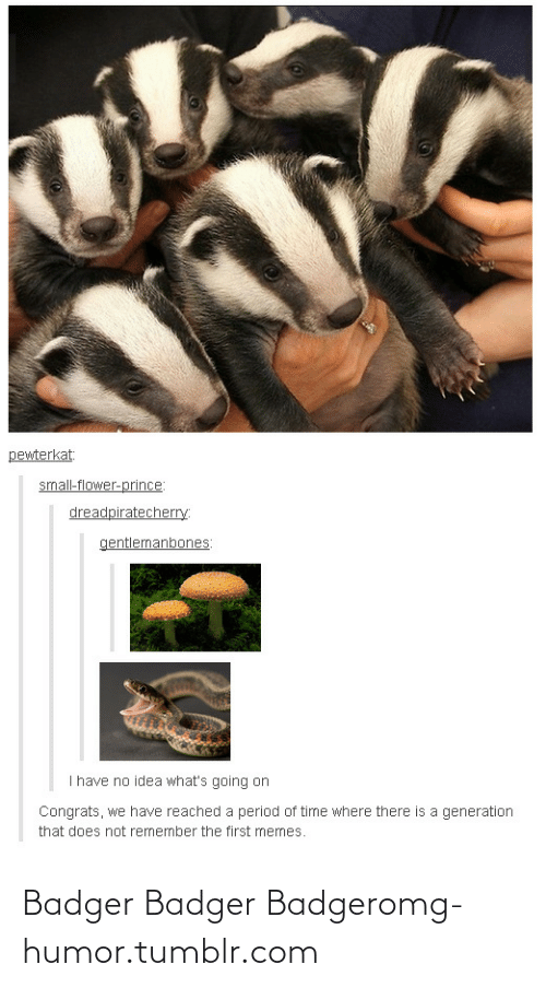 Idea Whats: pewterkat:  small-flower-prince:  dreadpiratecherry:  gentlemanbones:  I have no idea what's going on  Congrats, we have reached a period of time where there is a generation  that does not remember the first memes. Badger Badger Badgeromg-humor.tumblr.com