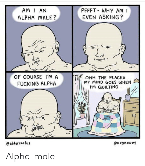 alpha: PFFFT WHY AM  EVEN ASKING?  AM I AN  ALPHA MALE?  OF COURSE I'M A  OHH THE PLACES  My MIND GOES WHEN  M QUILTING...  FUCKING ALPHA  eeldercactus  @DogmoDog Alpha-male