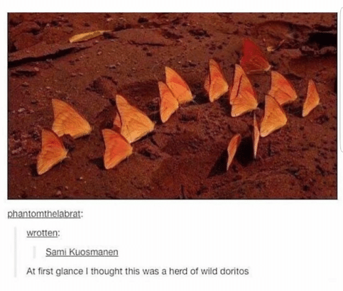 Wild, Thought, and Doritos: phantomthelabrat:  wrotten  At first glance I thought this was a herd of wild doritos