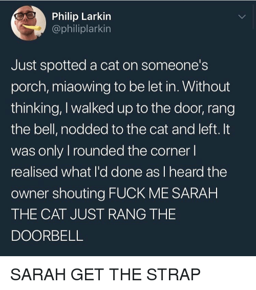 Funny, Fuck, and Cat: Philip Larkin  @philiplarkin  Just spotted a cat on someones  porch, miaowing to be let in. Without  thinking, I walked up to the door, rang  the bell, nodded to the cat and left. It  was only I rounded the corner l  realised what l'd done as I heard the  owner shouting FUCK ME SARAH  THE CAT JUST RANG THE  DOORBELL SARAH GET THE STRAP