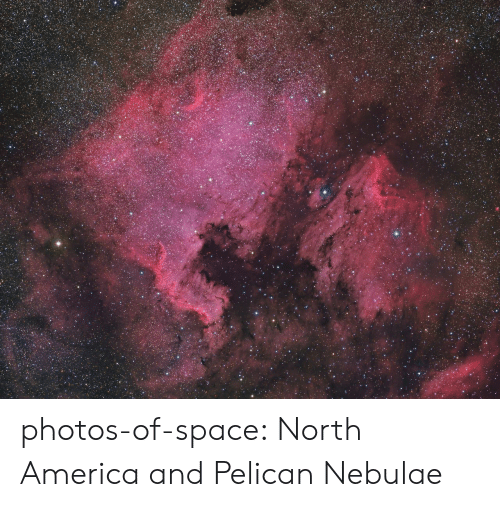 America, Tumblr, and Blog: photos-of-space:  North America and Pelican Nebulae