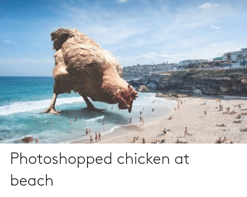 photoshopped: Photoshopped chicken at beach