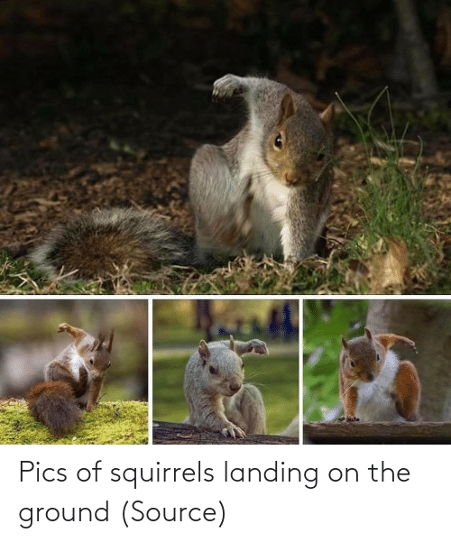 com: Pics of squirrels landing on the ground (Source)